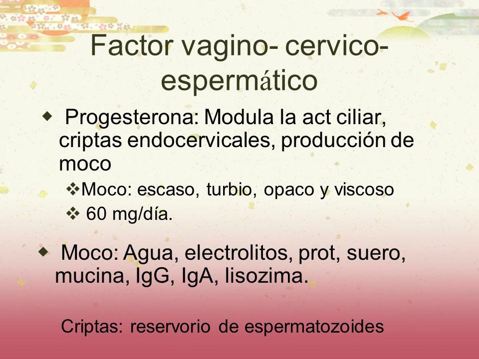 Factor vagino- cervico- esperm á tico Progesterona: Modula la act ciliar, criptas endocervicales, producción de moco Moco: escaso, turbio, opaco y vis
