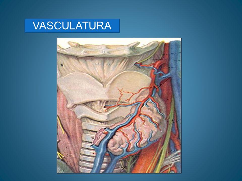 DIAGNOSTICO Pruebas acumétricas: *weber: lateralizado al oído enfermo o al más enfermo.