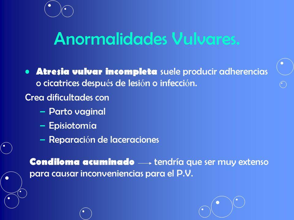 Anormalidades Vulvares. Atresia vulvar incompleta suele producir adherencias o cicatrices despu é s de lesi ó n o infecci ó n. Crea dificultades con –