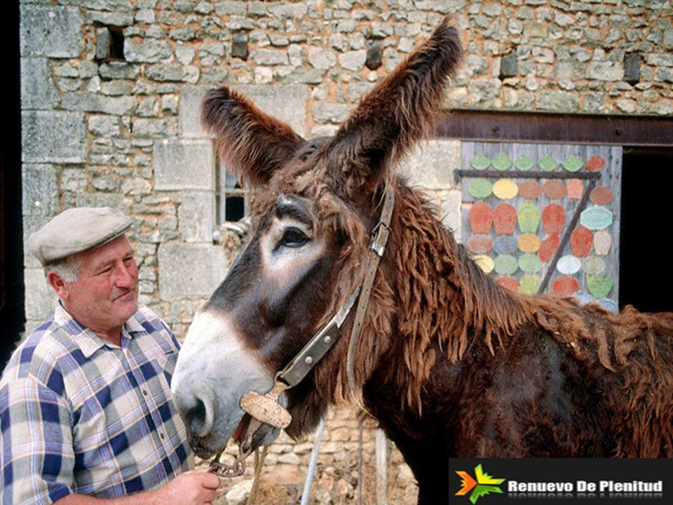 Finalmente, el campesino decidió que el burro ya estaba viejo, el pozo ya estaba seco y necesitaba ser tapado de todas formas; que realmente no valía la pena sacar al burro del pozo.