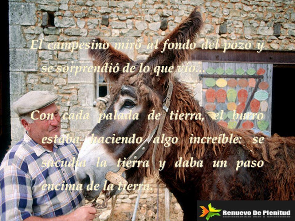 El campesino miró al fondo del pozo y se sorprendió de lo que vio... Con cada palada de tierra, el burro estaba haciendo algo increíble: se sacudía la