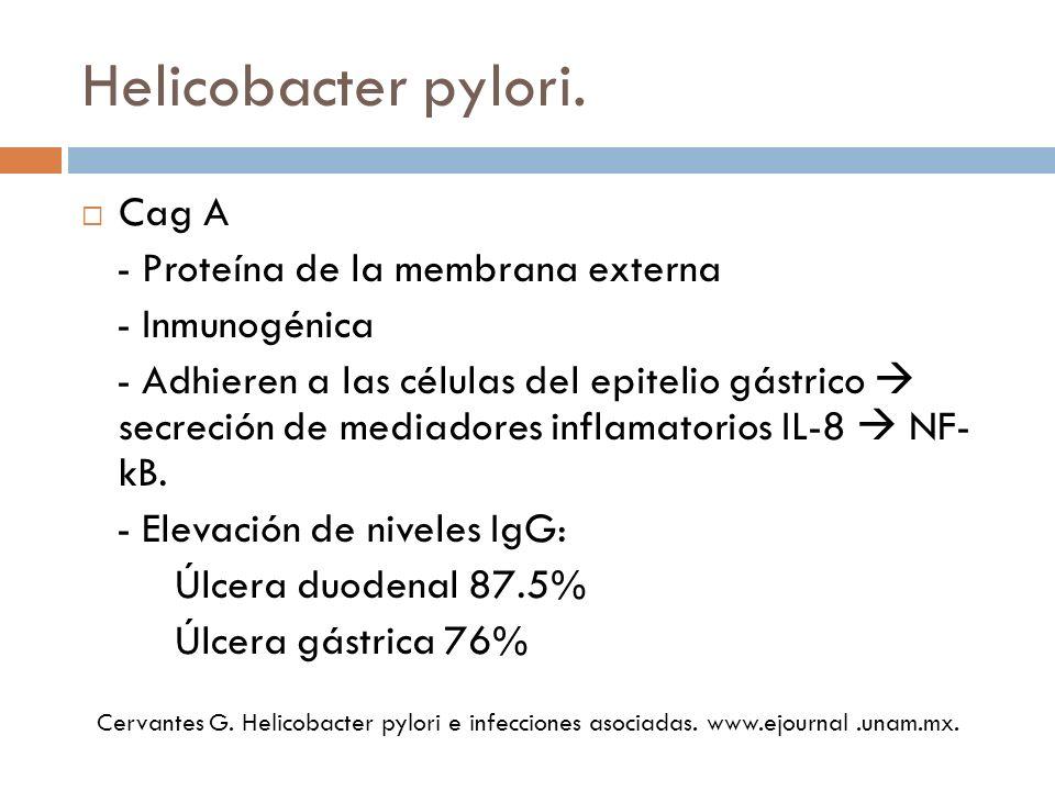 Prueba de ureasa Hidroliza la urea por acción de la ureasa - Iones de amonio - Aumenta el pH cambio de coloración CLO-test Prueba de aliento con urea marcada 13C o 14C - Cápsulas - 15-30 minutos.