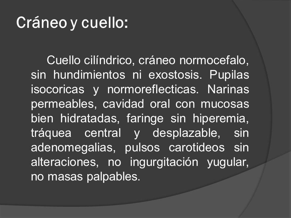 Cráneo y cuello: Cuello cilíndrico, cráneo normocefalo, sin hundimientos ni exostosis. Pupilas isocoricas y normoreflecticas. Narinas permeables, cavi