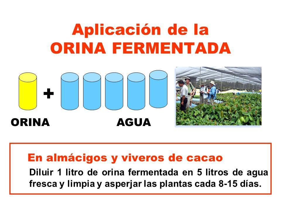 Aplicación de la ORINA FERMENTADA En almácigos y viveros de cacao Diluir 1 litro de orina fermentada en 5 litros de agua fresca y limpia y asperjar la