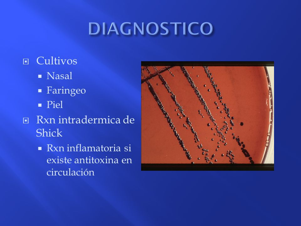 Cultivos Nasal Faringeo Piel Rxn intradermica de Shick Rxn inflamatoria si existe antitoxina en circulación