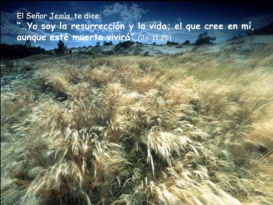 Dios te dice en Su Palabra: … y la sangre de Jesucristo su Hijo nos limpia de todo pecado (1ªJn. 1:7)