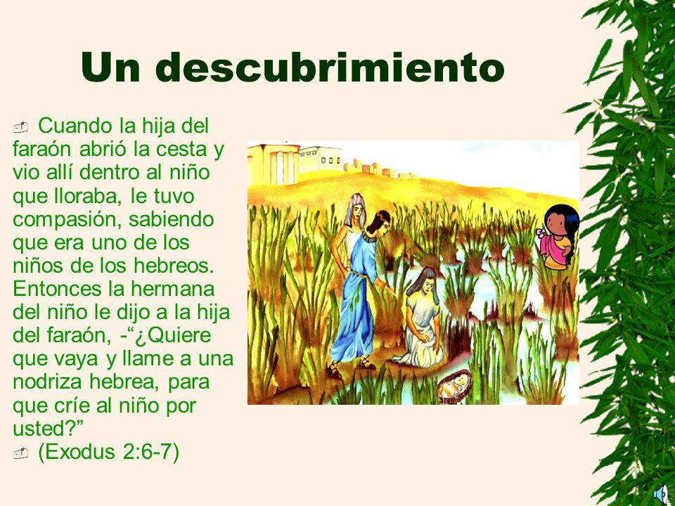 Un descubrimiento Cuando la hija del faraón abrió la cesta y vio allí dentro al niño que lloraba, le tuvo compasión, sabiendo que era uno de los niños de los hebreos.
