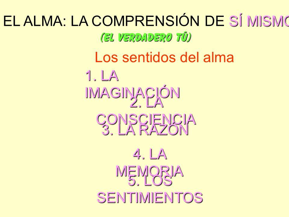 SÍ MISMO EL ALMA: LA COMPRENSIÓN DE SÍ MISMO (EL VERDADERO TÚ) Los sentidos del alma 1. LA IMAGINACIÓN 2. LA CONSCIENCIA 3. LA RAZÓN 4. LA MEMORIA 5.