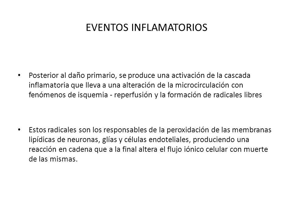 EVENTOS INFLAMATORIOS Posterior al daño primario, se produce una activación de la cascada inflamatoria que lleva a una alteración de la microcirculaci