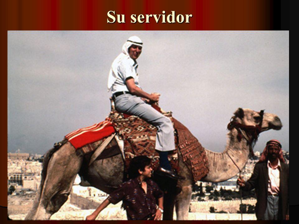 Camellos son comunes en el Medio-oriente