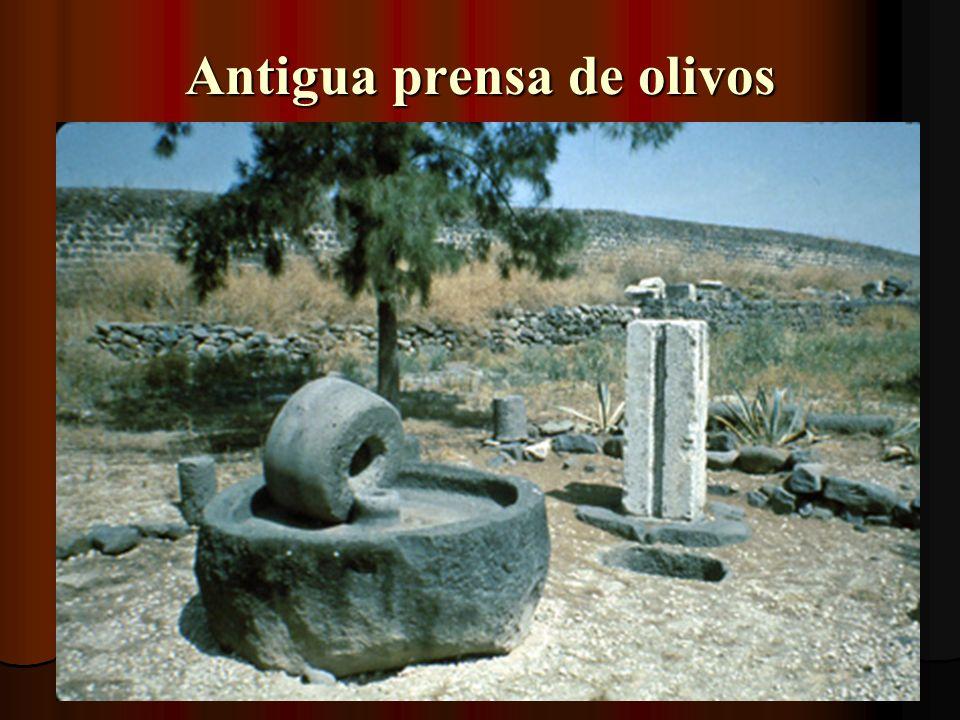 La sinagoga de Jairo Remodelada en el 3er siglo