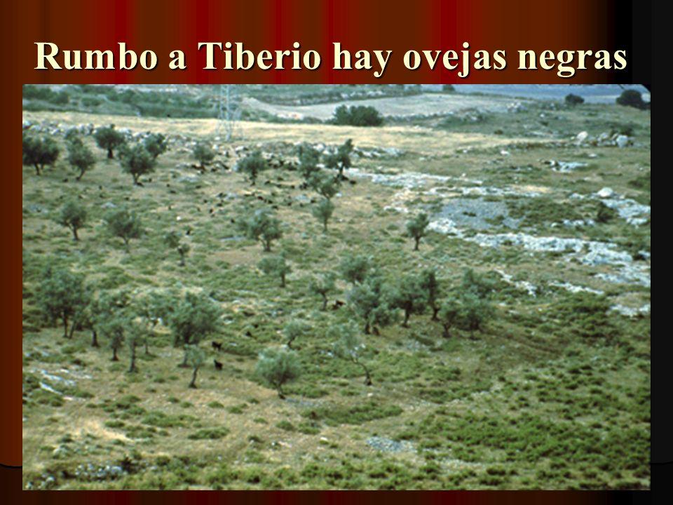 Rumbo a Tiberio hay ovejas negras