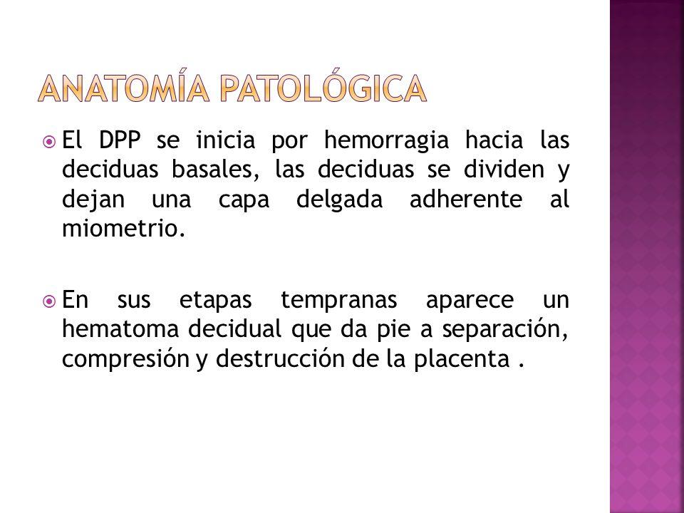 El DPP se inicia por hemorragia hacia las deciduas basales, las deciduas se dividen y dejan una capa delgada adherente al miometrio. En sus etapas tem