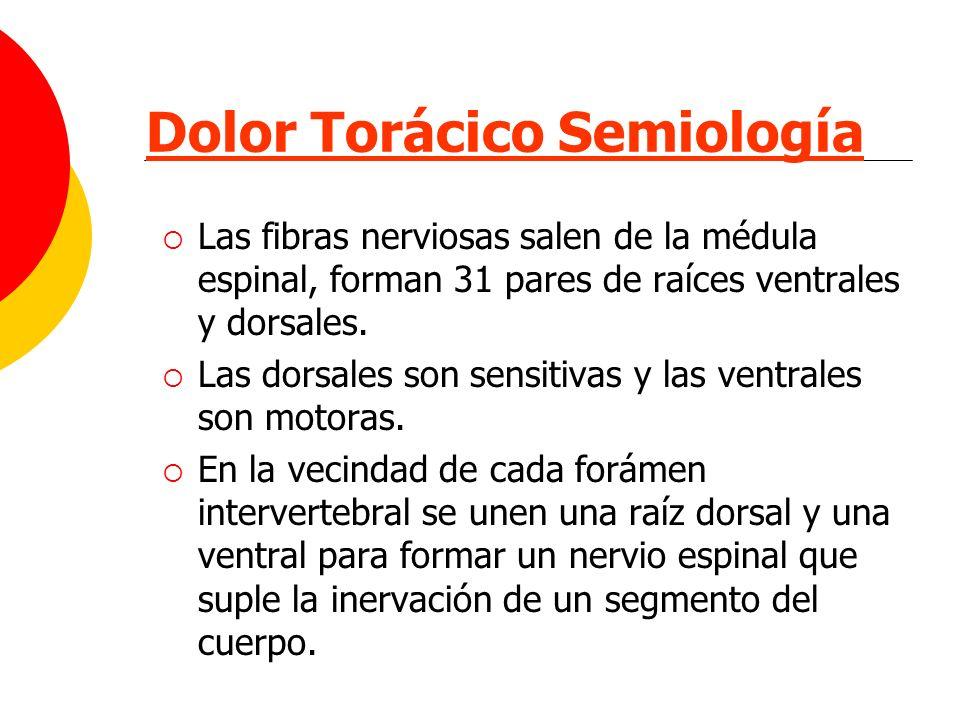 Dolor Torácico Semiología Las fibras nerviosas salen de la médula espinal, forman 31 pares de raíces ventrales y dorsales. Las dorsales son sensitivas