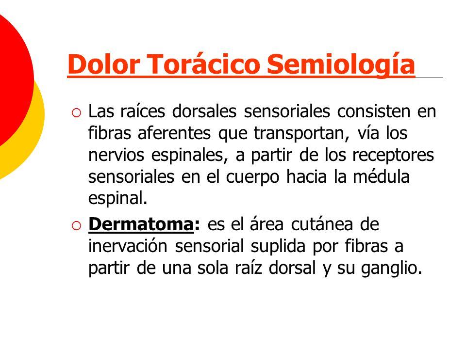 Dolor Torácico Semiología Las raíces dorsales sensoriales consisten en fibras aferentes que transportan, vía los nervios espinales, a partir de los re