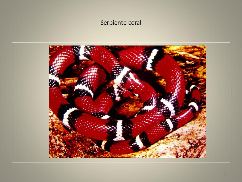 Bocaraca- crestas corneas supra ciliares. 58