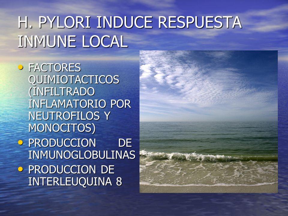 H. PYLORI INDUCE RESPUESTA INMUNE LOCAL FACTORES QUIMIOTACTICOS (INFILTRADO INFLAMATORIO POR NEUTROFILOS Y MONOCITOS) FACTORES QUIMIOTACTICOS (INFILTR