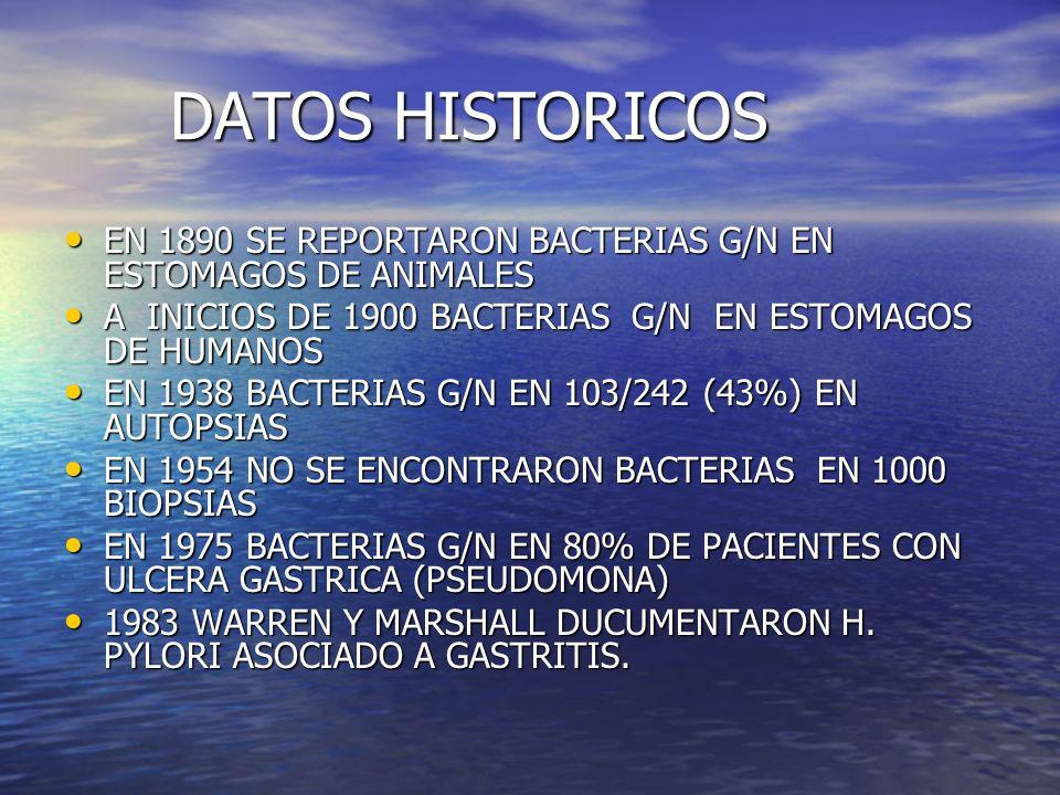 DATOS HISTORICOS EN 1890 SE REPORTARON BACTERIAS G/N EN ESTOMAGOS DE ANIMALES EN 1890 SE REPORTARON BACTERIAS G/N EN ESTOMAGOS DE ANIMALES A INICIOS D