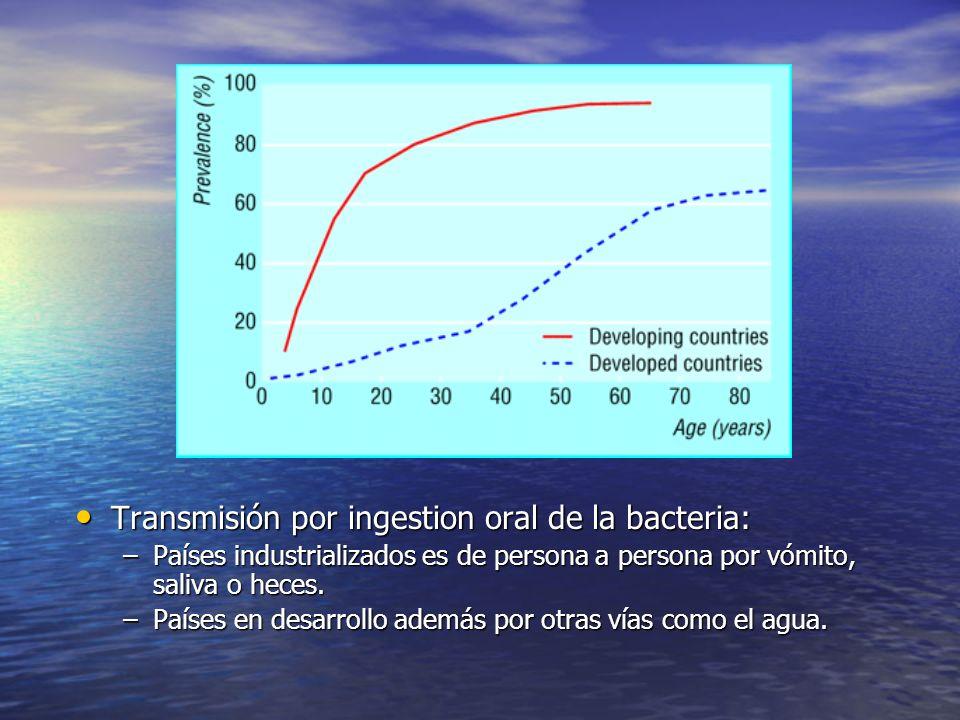 Transmisión por ingestion oral de la bacteria: Transmisión por ingestion oral de la bacteria: –Países industrializados es de persona a persona por vóm
