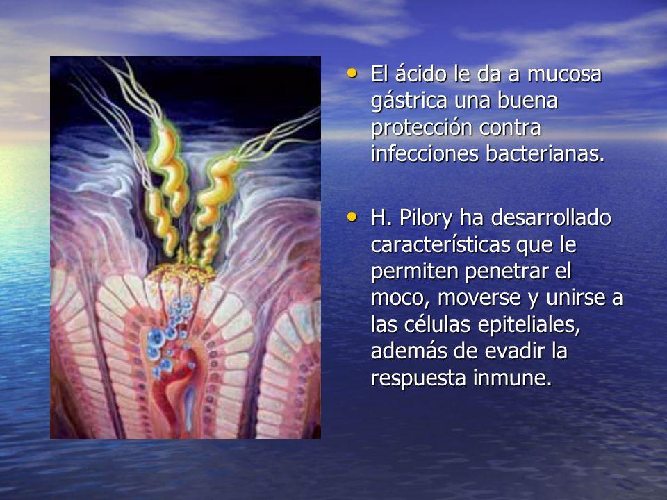 El ácido le da a mucosa gástrica una buena protección contra infecciones bacterianas. El ácido le da a mucosa gástrica una buena protección contra inf