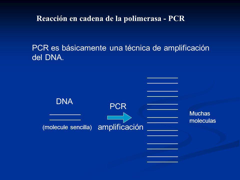 Reacción en cadena de la polimerasa - PCR PCR es básicamente una técnica de amplificación del DNA.