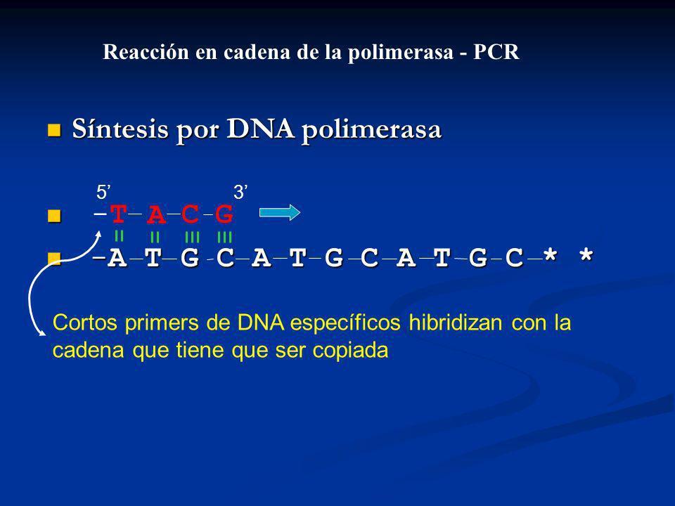 Síntesis por DNA polimerasa Síntesis por DNA polimerasa -A T G C A T G C A T G C * * -A T G C A T G C A T G C * * ACG-T-T Reacción en cadena de la polimerasa - PCR Cortos primers de DNA específicos hibridizan con la cadena que tiene que ser copiada 53