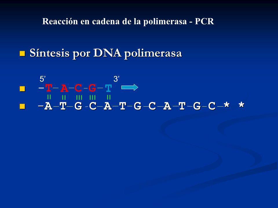 Síntesis por DNA polimerasa Síntesis por DNA polimerasa -A T G C A T G C A T G C * * -A T G C A T G C A T G C * * ACGT-T-T Reacción en cadena de la polimerasa - PCR 53