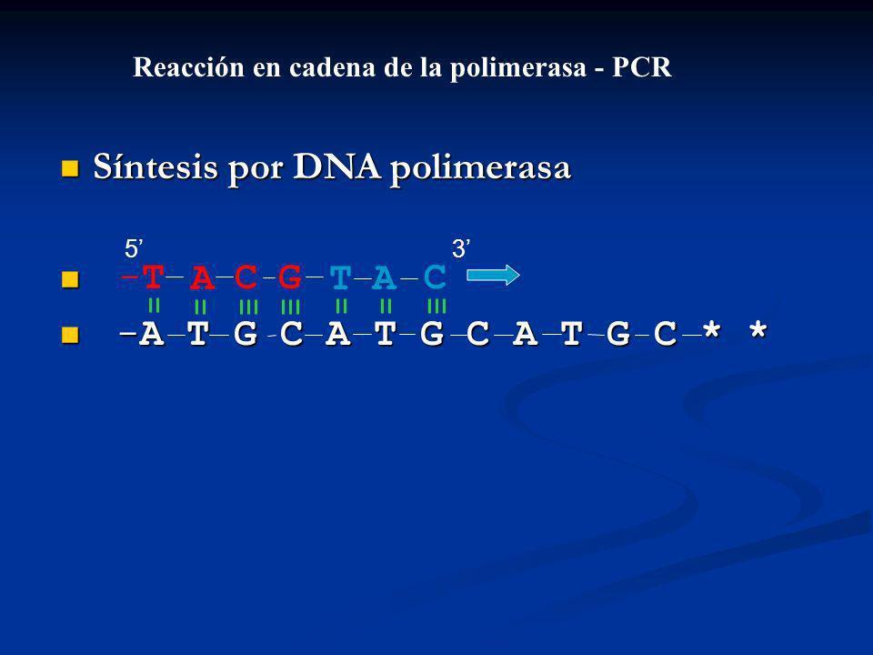 Síntesis por DNA polimerasa Síntesis por DNA polimerasa -A T G C A T G C A T G C * * -A T G C A T G C A T G C * * ACGT-T-TAC Reacción en cadena de la polimerasa - PCR 53