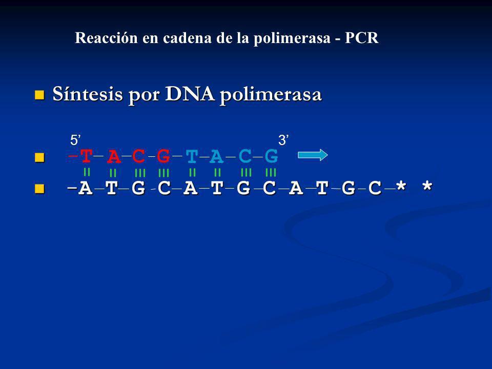 Síntesis por DNA polimerasa Síntesis por DNA polimerasa -A T G C A T G C A T G C * * -A T G C A T G C A T G C * * ACGT-T-TACG Reacción en cadena de la polimerasa - PCR 53