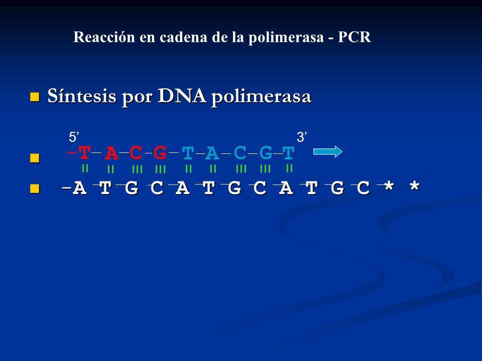 Síntesis por DNA polimerasa Síntesis por DNA polimerasa -A T G C A T G C A T G C * * -A T G C A T G C A T G C * * ACGT-T-TACGT Reacción en cadena de la polimerasa - PCR 53