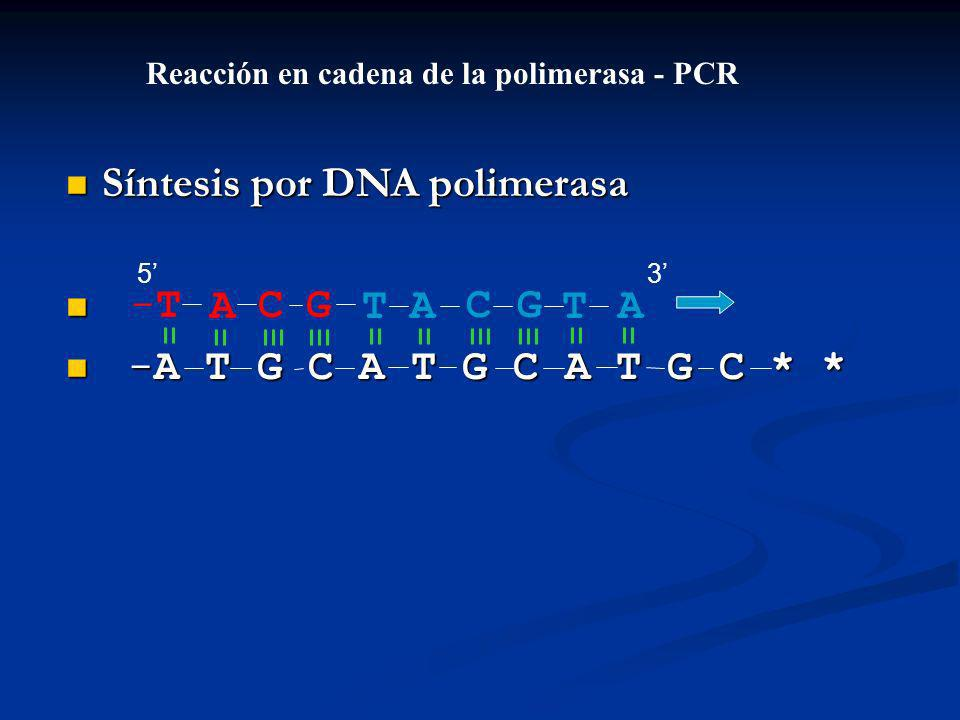 Síntesis por DNA polimerasa Síntesis por DNA polimerasa -A T G C A T G C A T G C * * -A T G C A T G C A T G C * * ACGT-T-TACGTA Reacción en cadena de la polimerasa - PCR 53