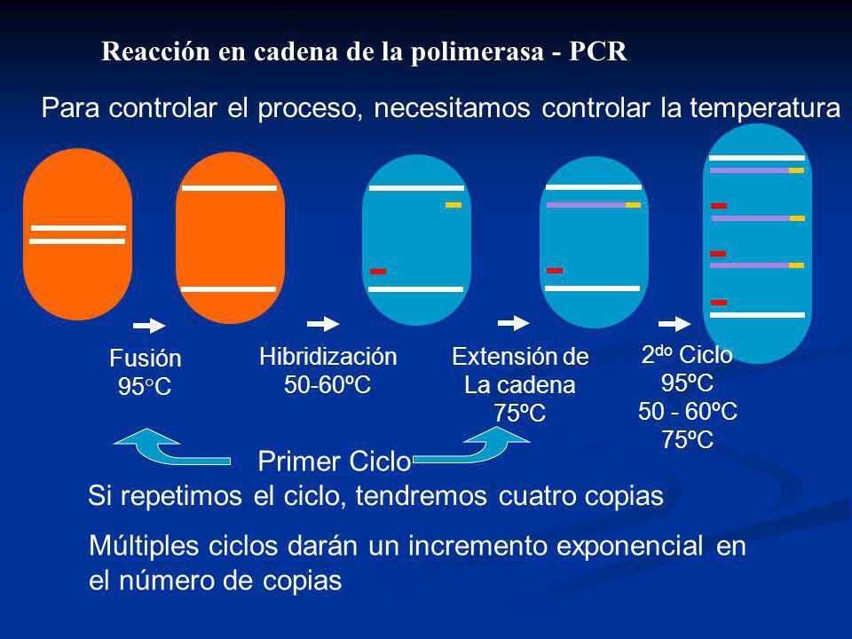 Para controlar el proceso, necesitamos controlar la temperatura Si repetimos el ciclo, tendremos cuatro copias Reacción en cadena de la polimerasa - PCR Fusión 95°C Hibridización 50-60ºC Extensión de La cadena 75ºC Primer Ciclo 2 do Ciclo 95ºC 50 - 60ºC 75ºC Múltiples ciclos darán un incremento exponencial en el número de copias