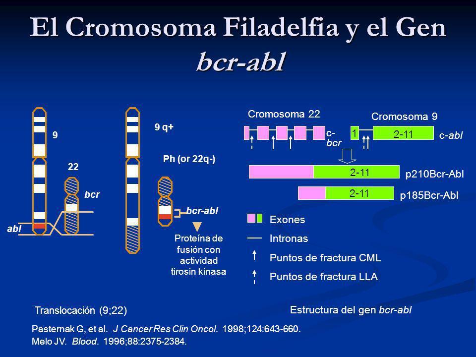 bcr-abl abl Proteína de fusión con actividad tirosin kinasa 22 bcr Ph (or 22q-) 9 9 q+ 1 p210Bcr-Abl p185Bcr-Abl 2-11 Cromosoma 9 c- bcr Cromosoma 22 c-abl 2-11 Exones Intronas Puntos de fractura CML Puntos de fractura LLA Translocación (9;22) Estructura del gen bcr-abl Pasternak G, et al.