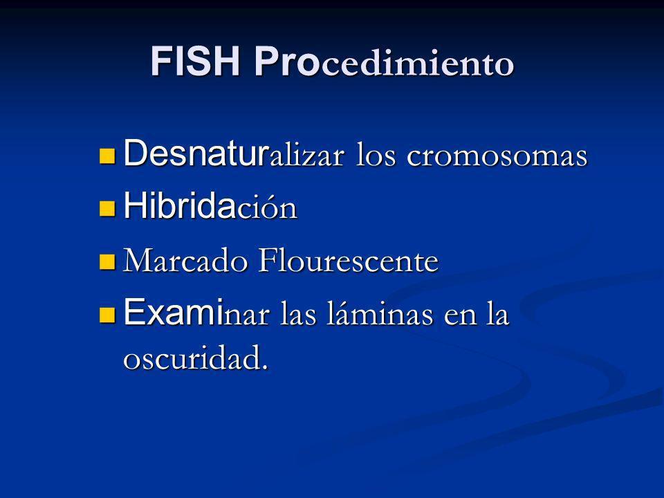 FISH Pro cedimiento Desnatur alizar los cromosomas Desnatur alizar los cromosomas Hibrida ción Hibrida ción Marcado Flourescente Marcado Flourescente Exami nar las láminas en la oscuridad.