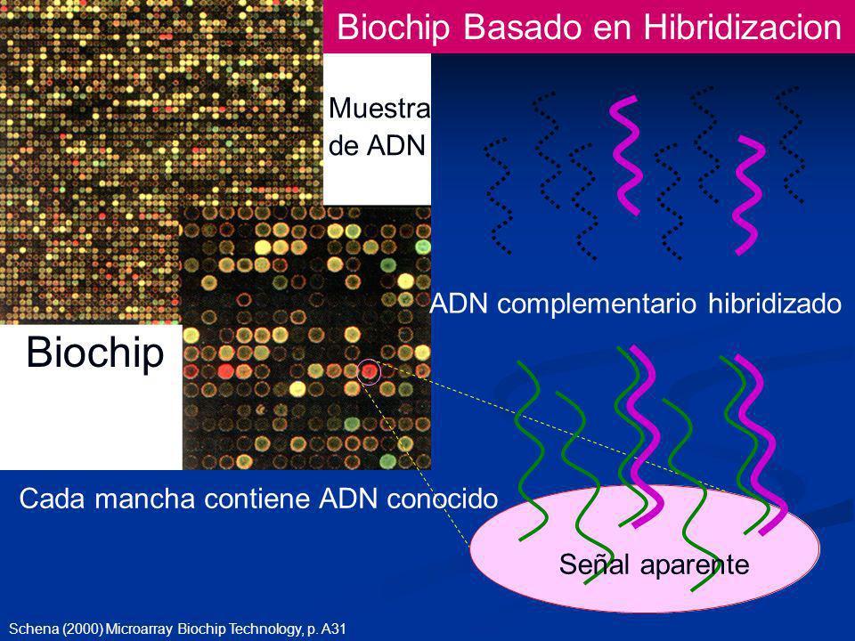 Muestra de ADN Cada mancha contiene ADN conocido Biochip Schena (2000) Microarray Biochip Technology, p.