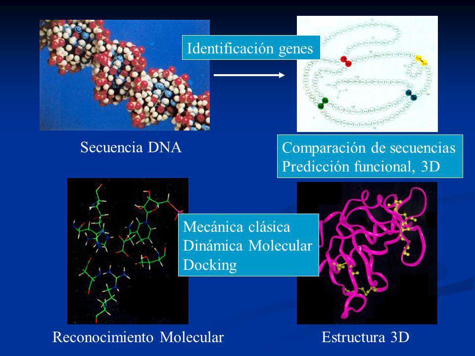 Secuencia DNA Secuencia Proteína Estructura 3DReconocimiento Molecular Identificación genes Comparación de secuencias Predicción funcional, 3D Mecánica clásica Dinámica Molecular Docking