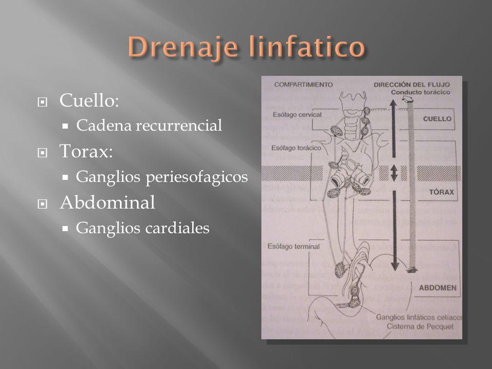 Cuello: Cadena recurrencial Torax: Ganglios periesofagicos Abdominal Ganglios cardiales