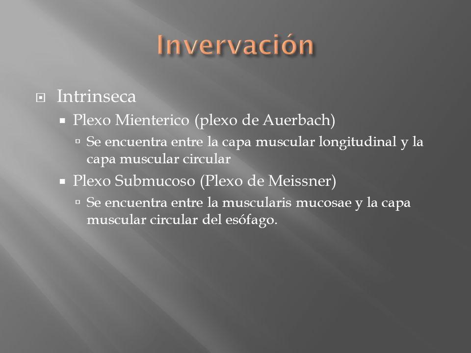 Intrinseca Plexo Mienterico (plexo de Auerbach) Se encuentra entre la capa muscular longitudinal y la capa muscular circular Plexo Submucoso (Plexo de