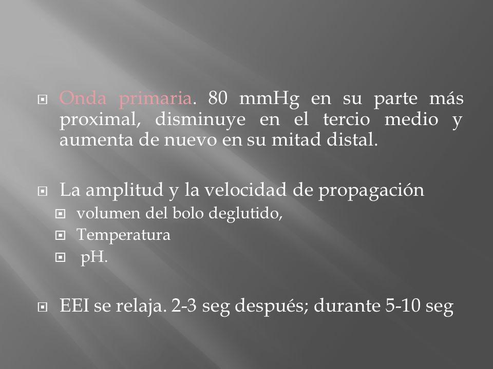 Onda primaria. 80 mmHg en su parte más proximal, disminuye en el tercio medio y aumenta de nuevo en su mitad distal. La amplitud y la velocidad de pro