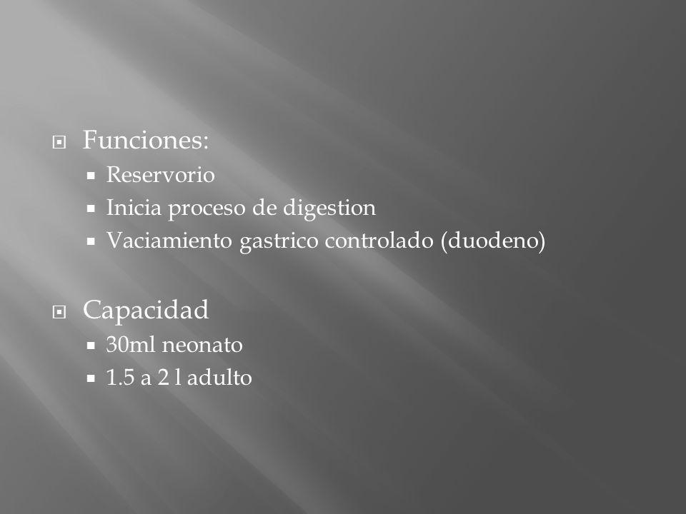 Funciones: Reservorio Inicia proceso de digestion Vaciamiento gastrico controlado (duodeno) Capacidad 30ml neonato 1.5 a 2 l adulto