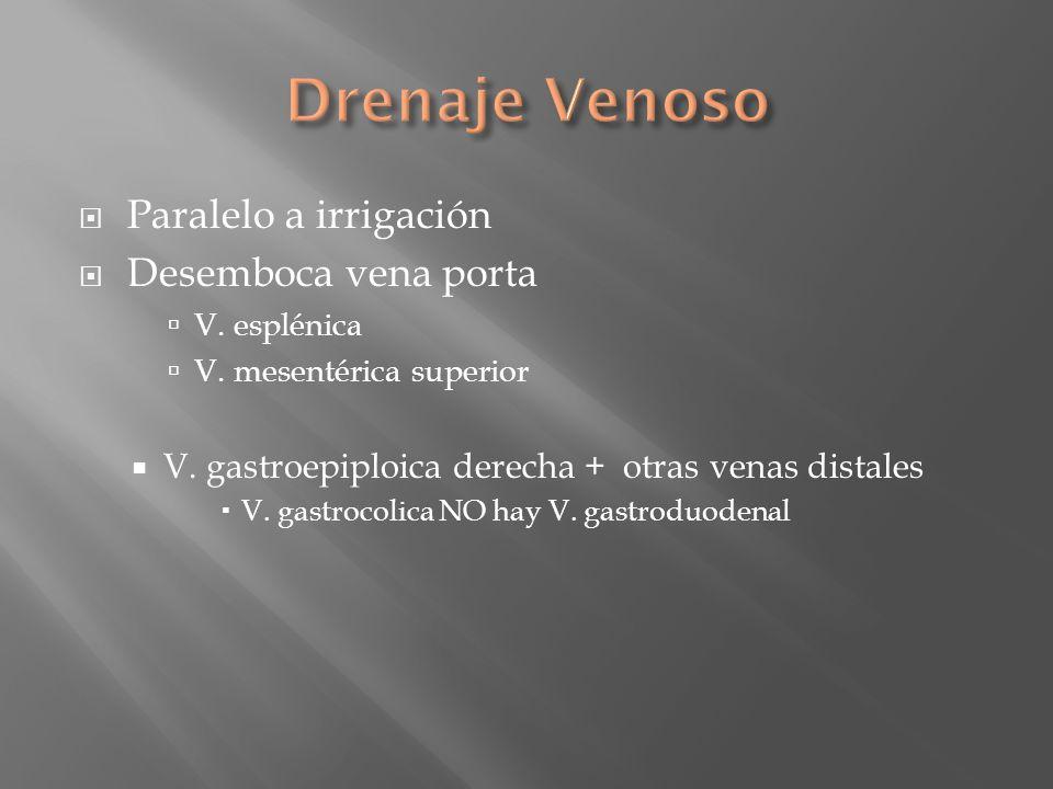 Paralelo a irrigación Desemboca vena porta V. esplénica V. mesentérica superior V. gastroepiploica derecha + otras venas distales V. gastrocolica NO h