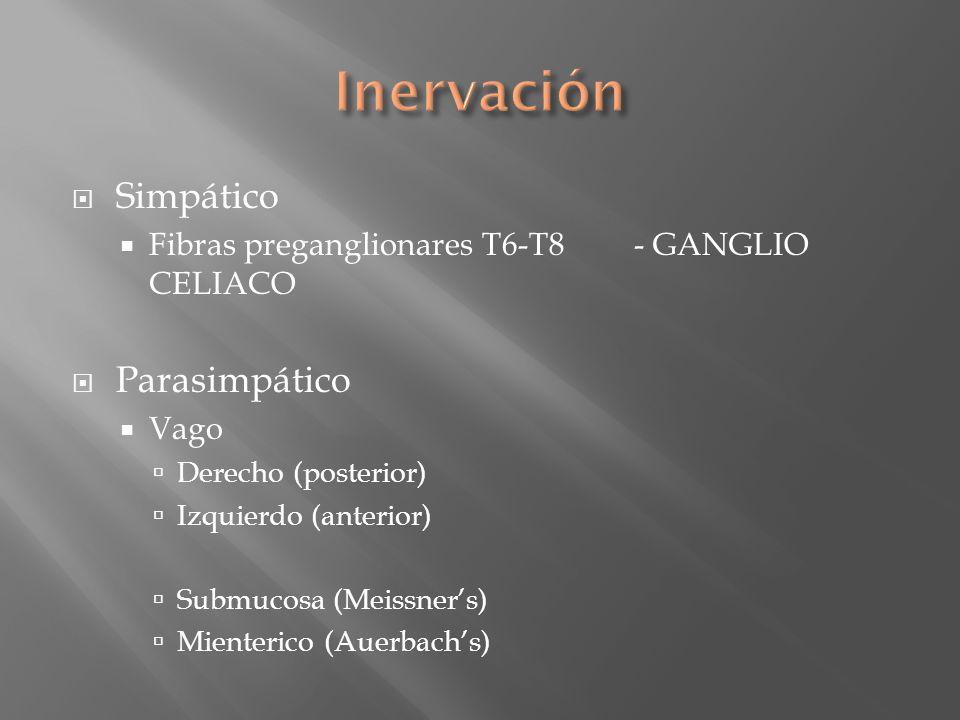 Simpático Fibras preganglionares T6-T8- GANGLIO CELIACO Parasimpático Vago Derecho (posterior) Izquierdo (anterior) Submucosa (Meissners) Mienterico (