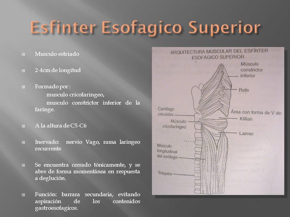 Musculo estriado 2-4cm de longitud Formado por : musculo cricofaringeo, musculo constrictor inferior de la faringe. A la altura de C5-C6 Inervado: ner