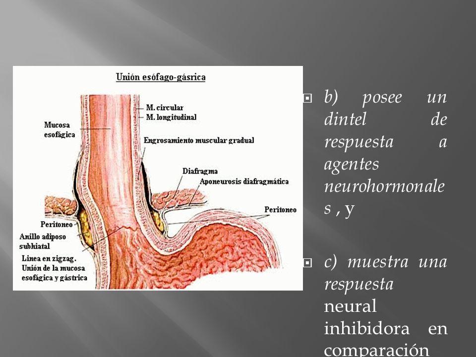 b) posee un dintel de respuesta a agentes neurohormonale s, y c) muestra una respuesta neural inhibidora en comparación con la respuesta excitadora de