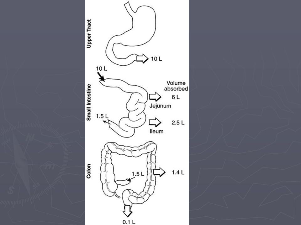 Evaluación de la diarrea Diarrea profusa con deshidratación Diarrea profusa con deshidratación Heces claramente melénicas o sanguinolentas Heces claramente melénicas o sanguinolentas Fiebre >38.5C Fiebre >38.5C Duración de la diarrea > 48 horas Duración de la diarrea > 48 horas Epidemia en la comunidad Epidemia en la comunidad Paciente mayor de 50 años Paciente mayor de 50 años Pacientes inmunocomprometidos Pacientes inmunocomprometidos
