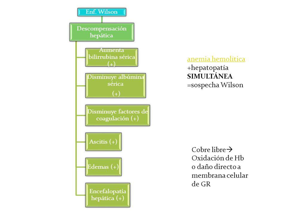 Enf. Wilson Descompensación hepática Aumenta bilirrubina sérica (+) Disminuye albúmina sérica (+) Disminuye factores de coagulación (+) Ascitis (+) Ed