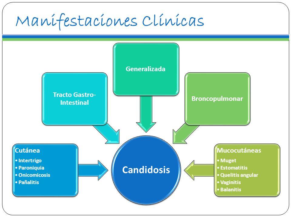 Manifestaciones Clínicas Candidosis Cutánea Intertrigo Paroniquia Onicomicosis Pañalitis Tracto Gastro- Intestinal GeneralizadaBroncopulmonar Mucocutá