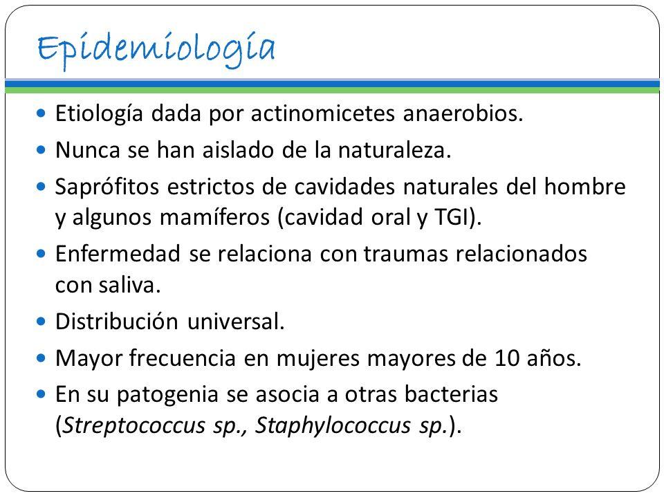 Epidemiología Etiología dada por actinomicetes anaerobios. Nunca se han aislado de la naturaleza. Saprófitos estrictos de cavidades naturales del homb