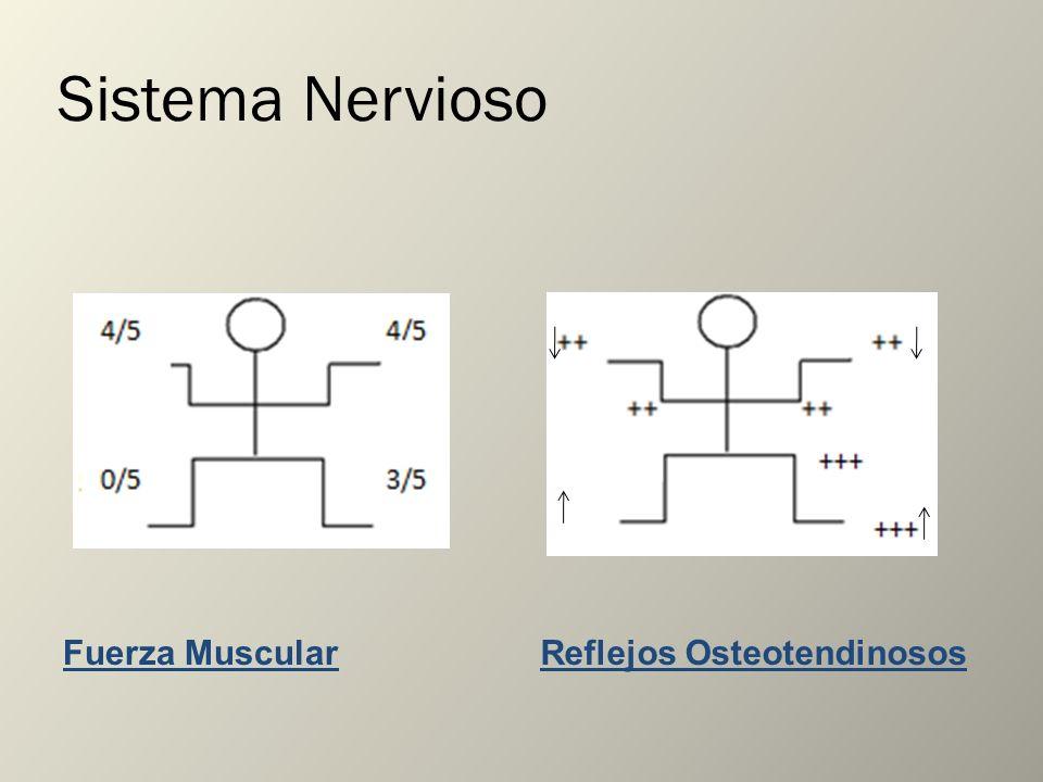 Sistema Nervioso Fuerza MuscularReflejos Osteotendinosos