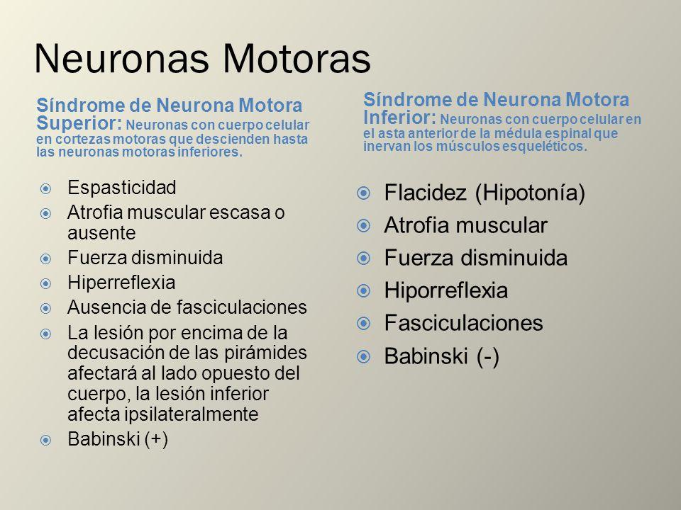 Neuronas Motoras Síndrome de Neurona Motora Superior: Neuronas con cuerpo celular en cortezas motoras que descienden hasta las neuronas motoras inferi
